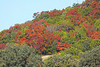 December 8, 2010 Fall follage on a hillside -  Red Oaks (red/orange), Live Oaks (dark green) and ashe juniper (yellow green)